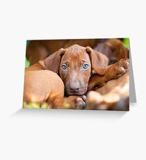 Rhodesian ridgeback puppy Greeting Card