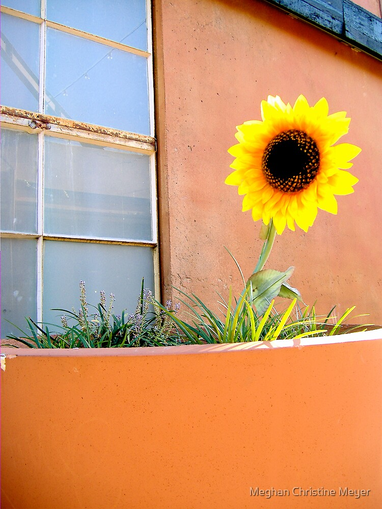 Sunflower by Meghan Christine Meyer