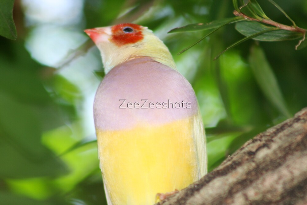 Look at the color of this Bird by ZeeZeeshots