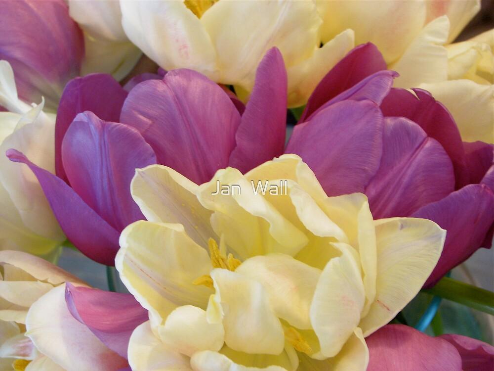 Tulips by Jan  Wall