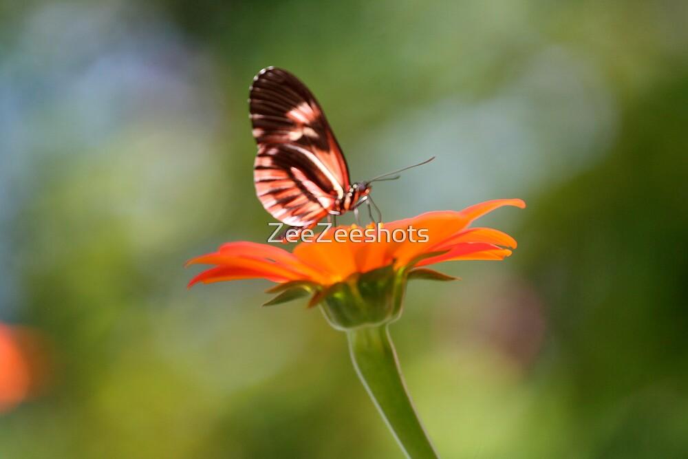 Pretty Butterfly by ZeeZeeshots