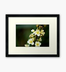 White and yellow flowers, macro photograph Framed Print