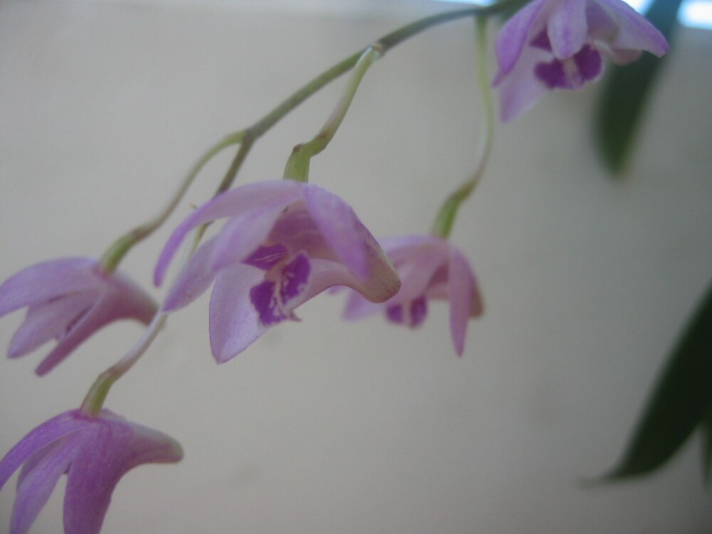 Orchids in miniature by mistresskelly