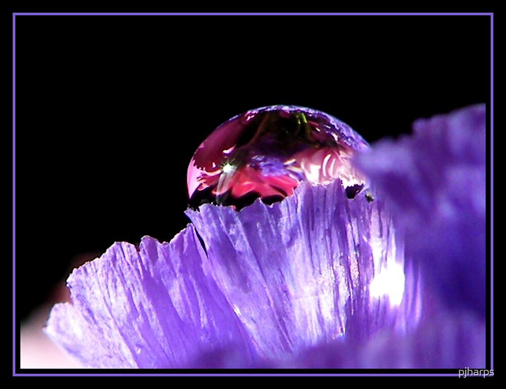 Flowers inside.... by pjharps
