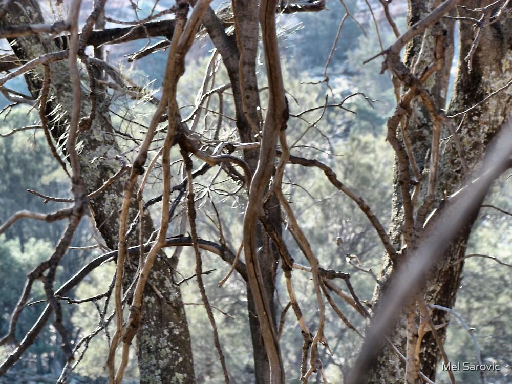 Yourumbulla Caves by Mel Sarovic