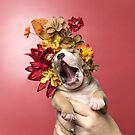 Flower Power, Luvable puppy by Sophie Gamand