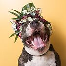 Flower Power, Luther laughing by Sophie Gamand