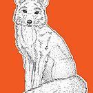 Fox by Adam Regester