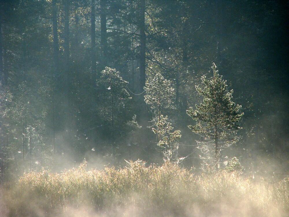 'Magic of Autumn' by Petri Volanen