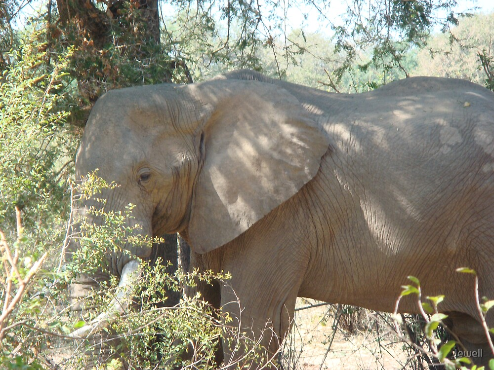 Campsite Elephant by Jewell