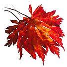 Fire Leaf White by woolcos