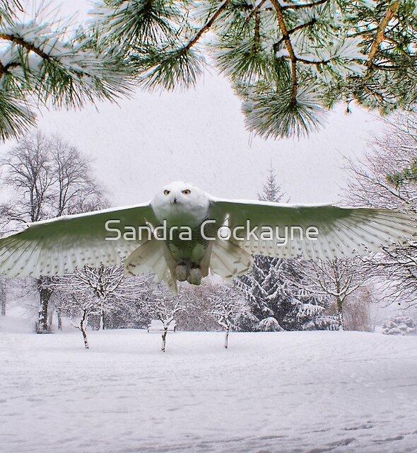 Snowy Owl In A Winter Wonderland by Sandra Cockayne