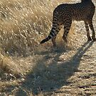 Cheetah by Jewell