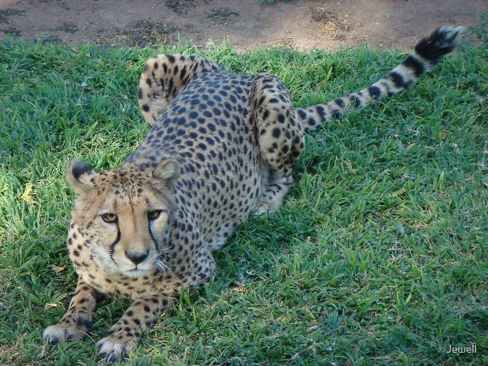 Cheetah by Jewell