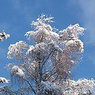 Snowy Birches by Jennifer J Watson