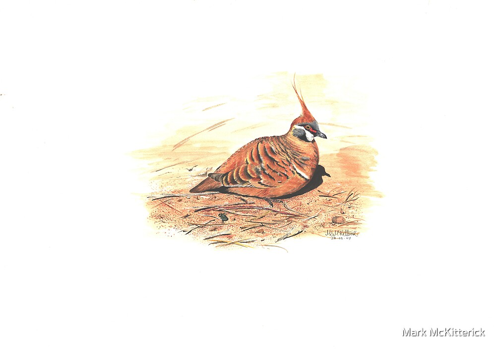Spinifex Pigeon by Mark McKitterick