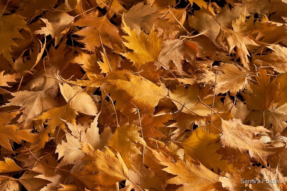Golden Birch Leaves  by Sandra Foster
