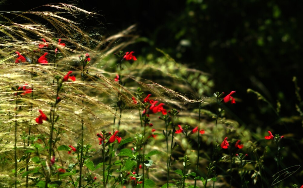 In the Weeds by David W Kirk