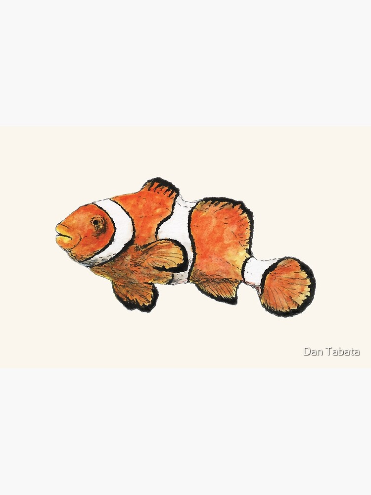 Clownfish by dmtab
