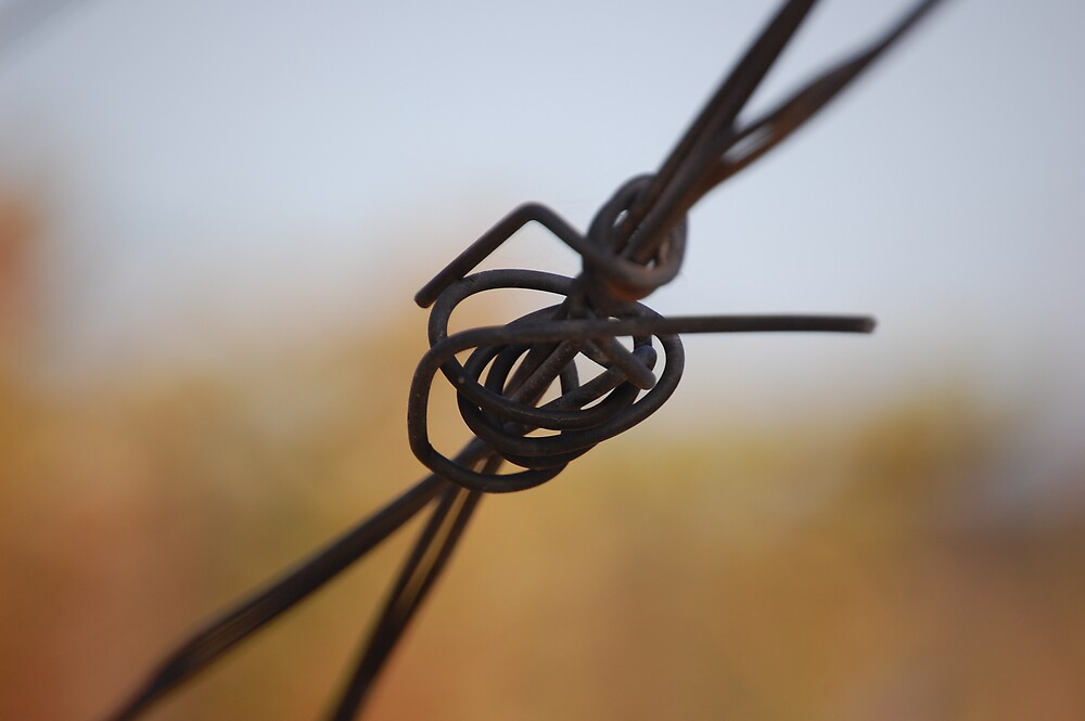 Fence wire by duffpics