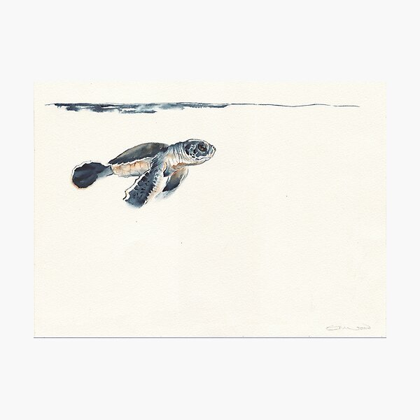 watercolour turtle hatchling  Photographic Print