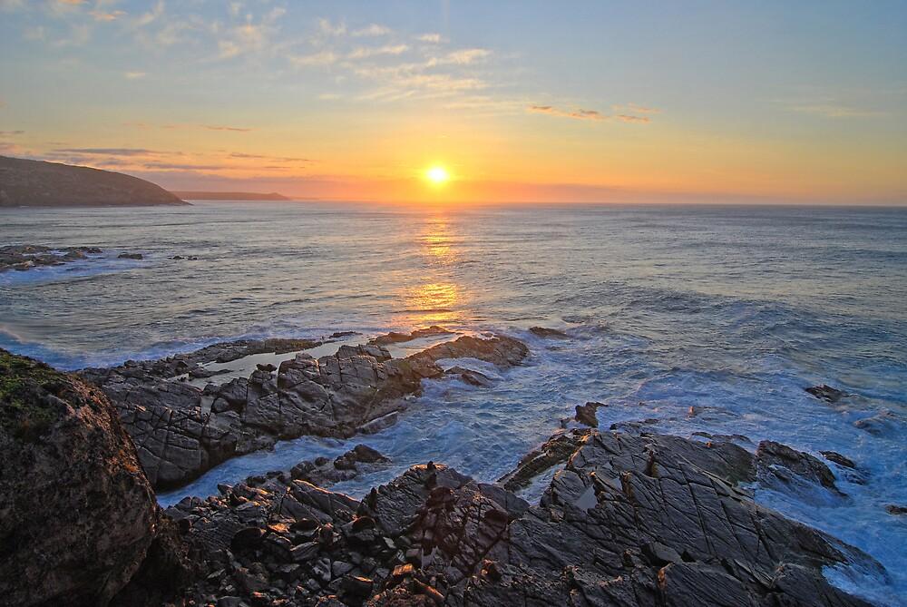A Seal's Sunrise by Wayne England