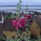 Another Culross Hollyhock by biddumy