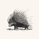 Porcupine by Dan Tabata