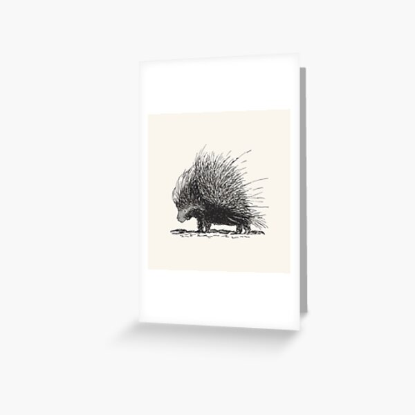 Porcupine Greeting Card