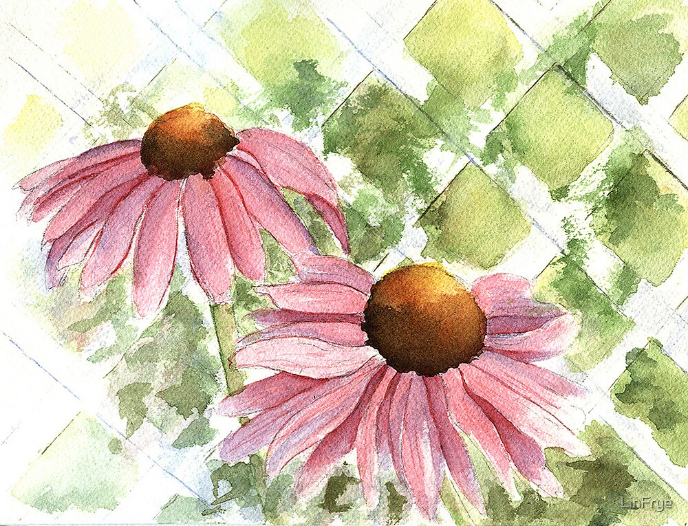 Cone Flowers by LinFrye