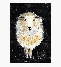 One Sheep.. Photographic Print