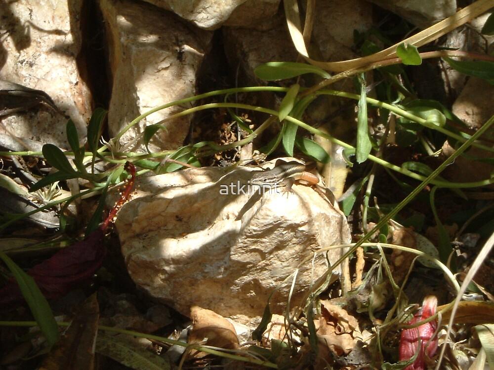 Lizard by atkinnt
