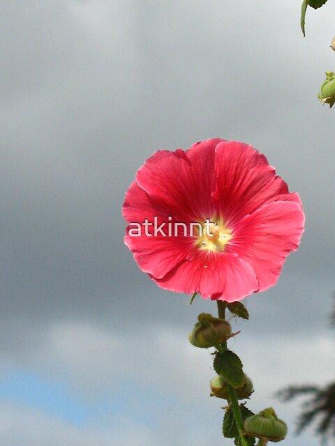 Red flower by atkinnt