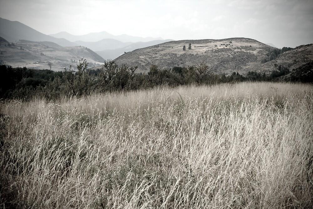 Grass by Adam  Scholl