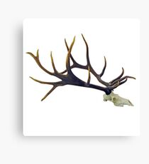 Bull elk skull European mount Canvas Print