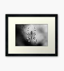 Arachnid II Framed Print