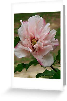 Vidalia's Flower by Lisa Taylor