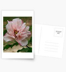 Vidalia's Flower Postcards