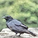 Crows Everywhere Are Equally Black by taiche