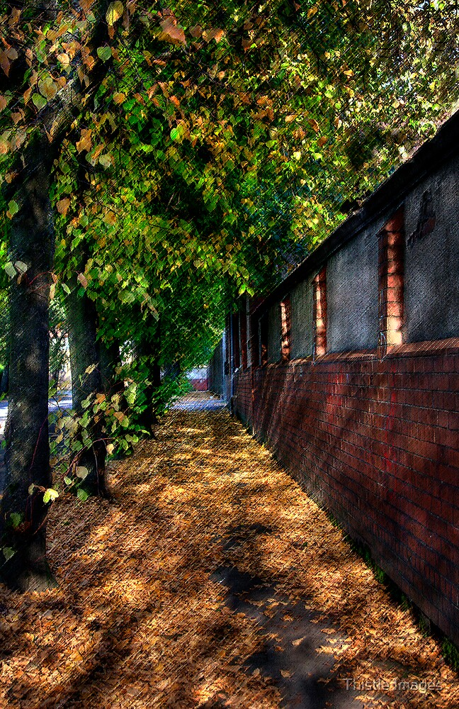 Dumbarton Street by Thistle Images