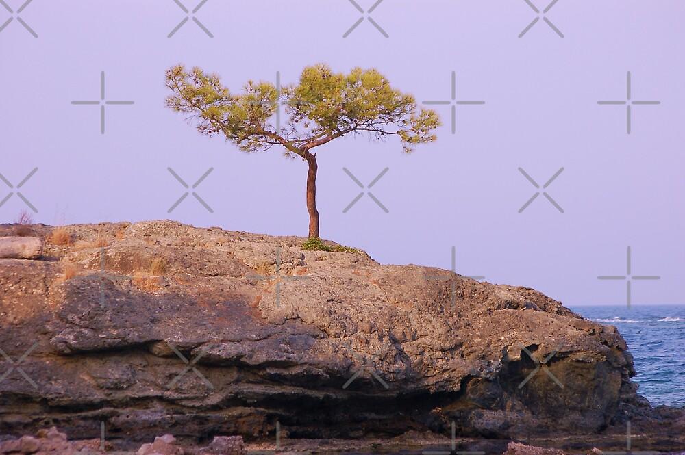 Where is this tree growing on rocks? by loiteke