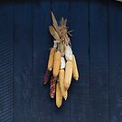 Dried Corn Ears on a Door by Yair Karelic