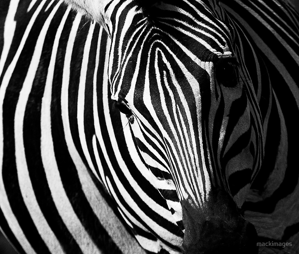 Black & White by mackimages