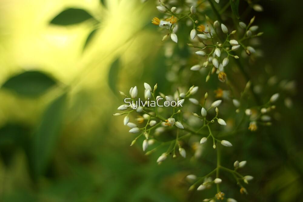 Thursday green by SylviaCook