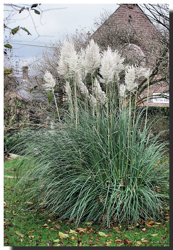 Grass by Cariad