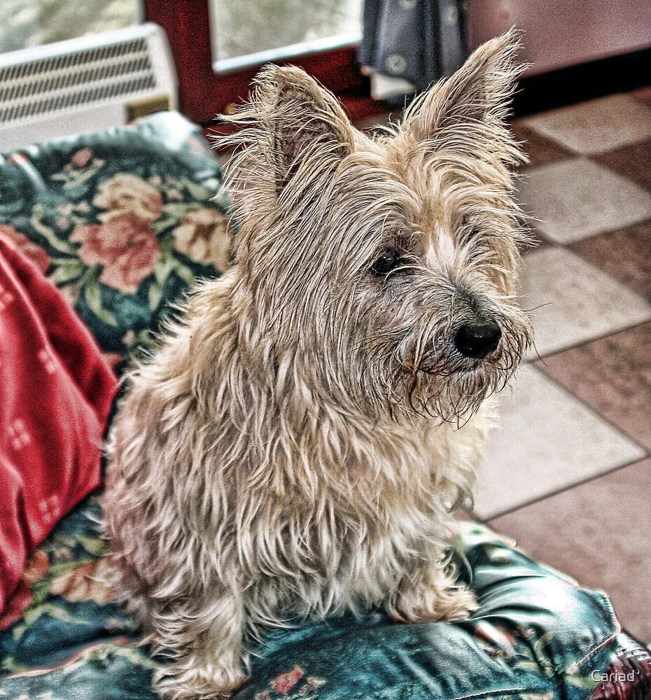 Watch Dog... by Cariad