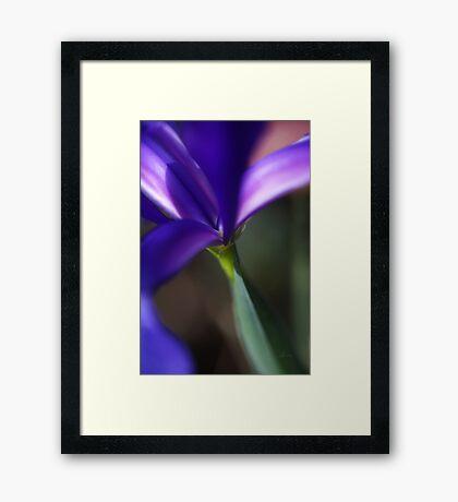 Iris Nature's Design Framed Print