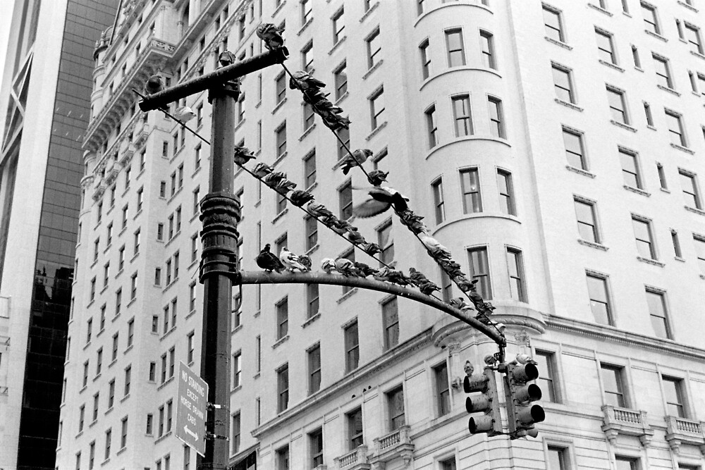 Pigeons, New York by Andrew Skinner