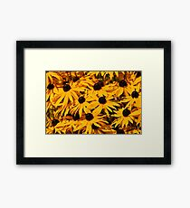 A Bed of Black-Eyed Susans / Rudbeckias in the Summer Sun Framed Print