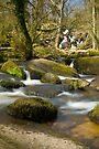 Becky Falls: Dartmoor Devon UK by DonDavisUK